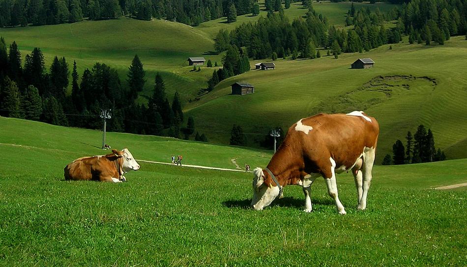 Pantelić doo Kraljevo predsmeše, smeše i dopunske smeše za telad i muzne krave
