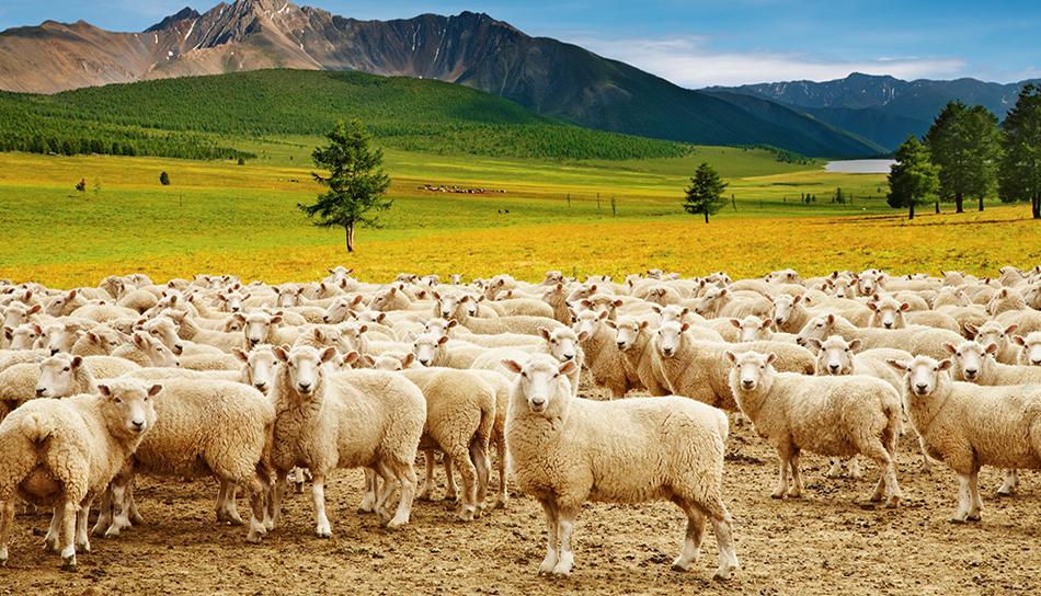 Pantelić doo Kraljevo predsmeše, smeše i dopunske smeše za ovce i koze