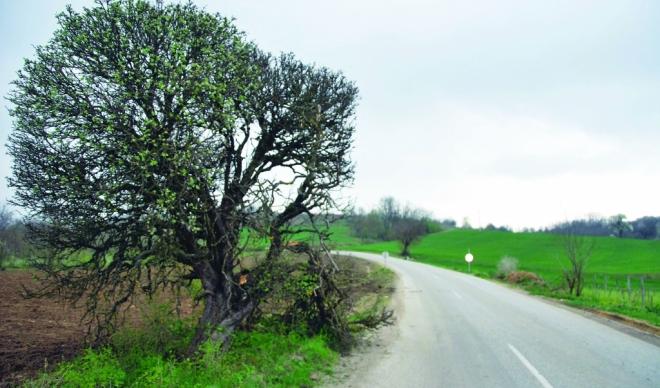 Turistička organizacija opštine Rekovac turistička ponuda Zlo drvo