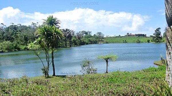 bois_cheri_tea_plantation_mauritius_photo_by_ira_petrov