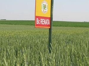 bc_renata