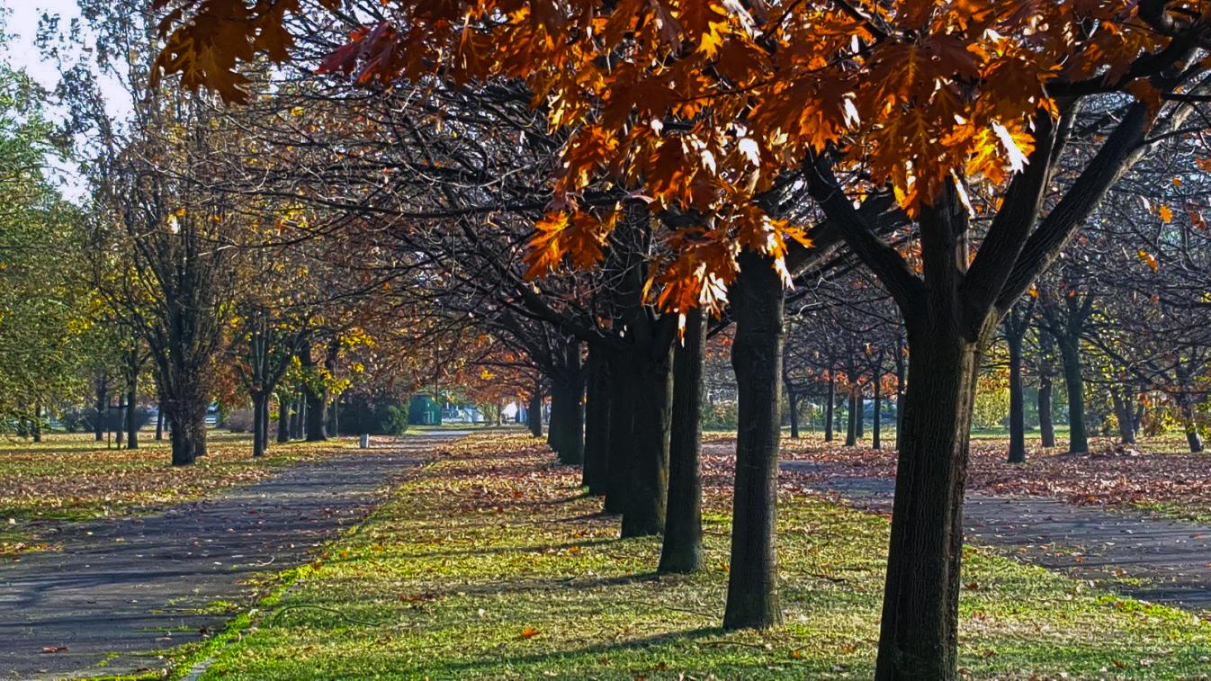 drvored_u_jesen_park_prijateljstva_beograd_oktobar_2018