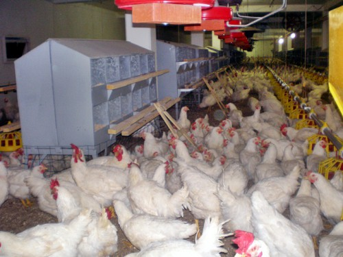 Gebi proizvodnja potpunih i dopunskih smeša, predsmeša i premiksa za ishranu životinja