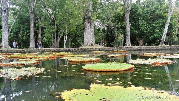 sir_seewoosagur_ramgoola_botanical_garden_photo_by_ira_petrov