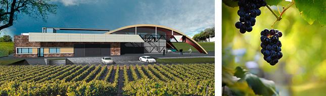 Vinarija Despotika vinogradi