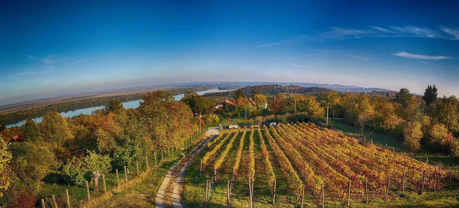vinarija_plavinci_paorama_jesen