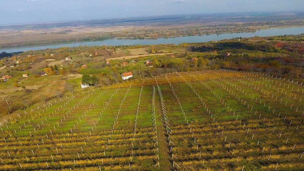 vinogradi-vinarija-stojanovic