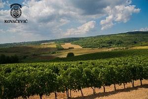 vinogradi-vinarije-kovacevic
