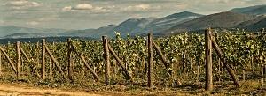 vinogradi_na_lipnici